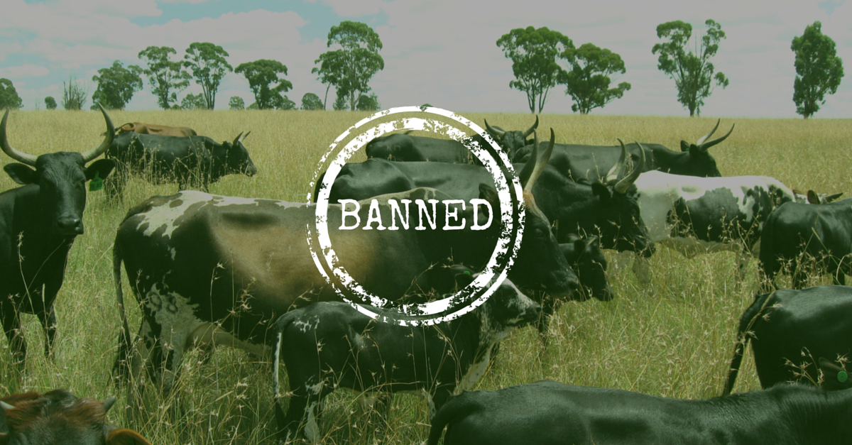banned-beef-in-india