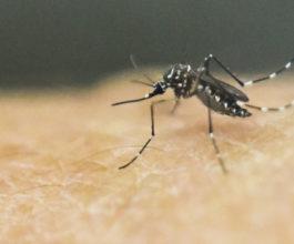 Zika measure