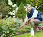 protect-your-garden-in-the-winter-months